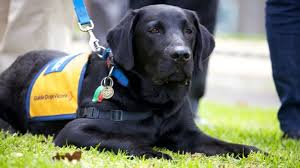 Image result for guide dog victoria