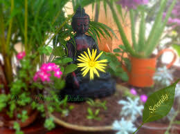Small Picture How To Decorate Balcony With Plants In India Best Balcony Design