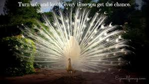 Peacock Beauty Quotes Best of On Turning Soft And Lovely Notes And Quotes