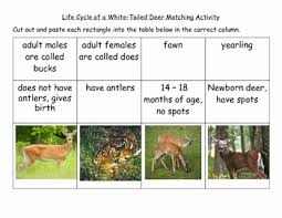Fawn Age Chart 60 Elegant The Best Of Whitetail Deer Aging Chart Home