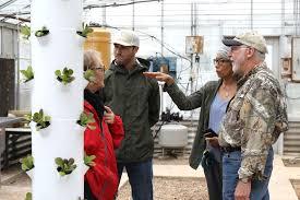 Texas A&M undergraduate initiates urban farming on campus