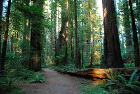 Image result for avenue of the giants california