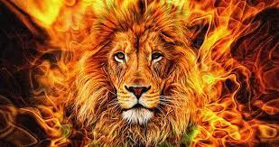 Wallpaper : lion, animals, big cats ...