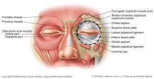 Eyelid Anatomy Duke Anatomy Lab 20 Eye Ear