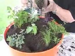 beginners herb garden pdf herb