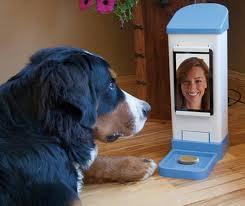 Teen with a dog webcam