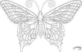 Free Coloring Pages Butterfly Coloring Page Butterfly Free Printable