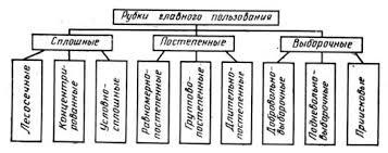 Отчет по практике Организация и производственная деятельность  Все рубки главного пользования разделяются на сплошные постепенные выборочные Сплошные рубки разделяются на лесосечные концентрированные