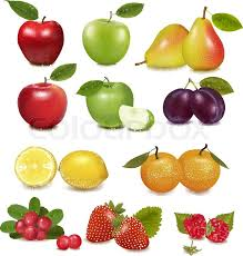 pictures of different fruit. Perfect Different Big Group Of Different Fruit Vector Vector Throughout Pictures Of Different Fruit 2