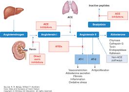 Neurohormonal Blockade In Heart Failure Color Atlas And