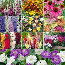Small Picture Cottage garden plants
