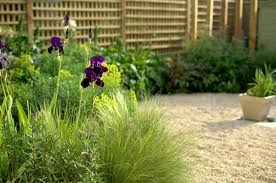 A Small Gravel Garden Paul Ridley Garden Design Oxford New Gravel Garden Design