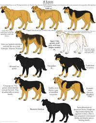 Dog Color Chart Dog Colors Guide Agouti By Leonca Dogs Dog Chart Dog Coats