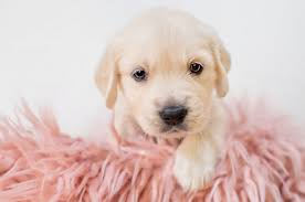 2560x1700 Puppy, Cute, Dogs Wallpapers ...