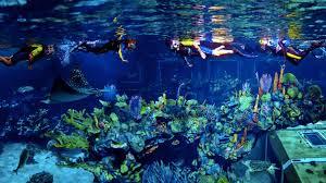 underwater restaurant disney world. Wonderful Disney Throughout Underwater Restaurant Disney World E