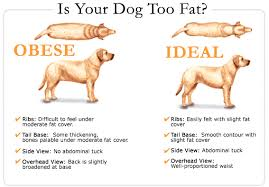 Does My Dog Have A Healthy Weight Albuquerque Vetco