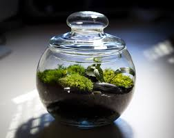 how to make your own terrarium. Modren How How To Make Your Own Terrarium  Inhabitat  Green Design Innovation  Architecture Building Inside To N
