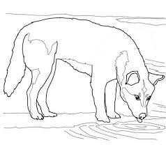 Dingo Drinks Water Coloring Page Free Printable Coloring Pages