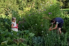 6 reasons to start a no dig garden