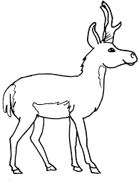 Dessin Coloriage Animal Cerf Ou Elan Animal Foret Education