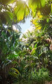 Smartphone Jungle Wallpapers ...