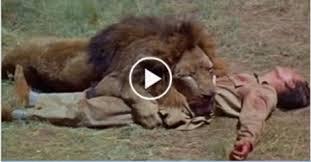 pitbull dog vs lion. Delighful Pitbull Pitbull Dog Vs Lion  Photo9 And Dog Vs Lion E