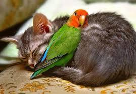 Image result for love animals pix