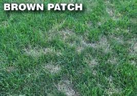 Brown Patch Disease Treating Brown Patch In Lawns Treatment For Brown Patch Lawn Disease