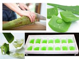 Image result for healing with aloe vera