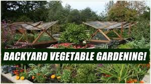 how to start a vegetable garden in your backyard for beginners