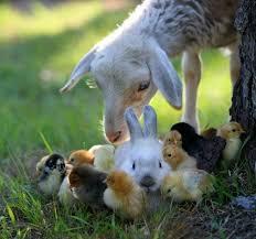 real baby farm animals. Perfect Baby Baby Farm Animals To Real Farm Animals O