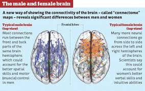 the hardwired difference between male and female brains could 3decbraingraphic jpg