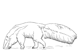 Small Picture Anteater coloring pages Free Coloring Pages