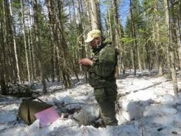 В Красноярском крае завершено контрольное обследование   контрольного обследования подтверждает необходимость реализации мероприятий борьбы с сибирским шелкопрядом на запланированной площади в Енисейском