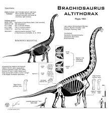 brachiosaurus size 41 best brachiosaurus jurassic images on pinterest dinosaurs