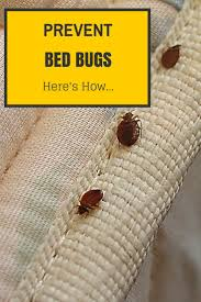 Best 25+ Bed bugs treatment ideas on Pinterest   Bed bug remedies ...