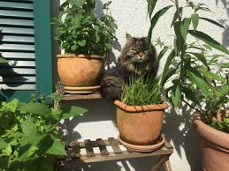Der Katzenbalkon