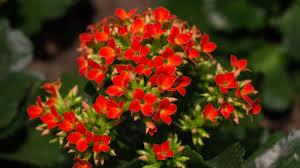 Die Pflanzen Wissen Wann Es Frühling Wird Wetterde