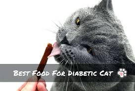best food for diabetic cat. Best Food For Diabetic Cat Canned