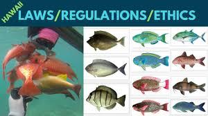 Oahu Fish Chart Hawaii Fishing Spearfishing Tips Rules Regulations Ethics