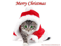 Christmas Cats Wallpapers | Christmas Kittens Wallpapers