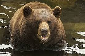 essay are atheists smarter than the average bear conservapedia essay are atheists smarter than the average bear