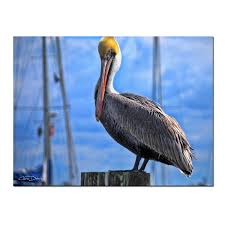 wall art chris doherty pelican canvas  on pelican canvas wall art with chris doherty pelican canvas wall art ready2hangart