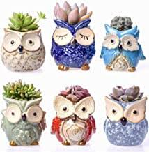 Cute Owl - Amazon.com