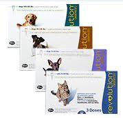 Save Money Treating Fleas With Revolution Savvy Pet Care