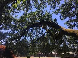 Tree Risk Assessment Teragan Associates Inc