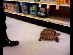 petsmart reptiles for sale. Delighful Petsmart Tortoise In Petsmart With Petsmart Reptiles For Sale