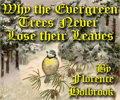 why evergreens never lose their leaves