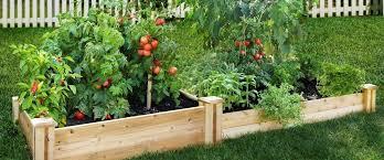 vegetable garden how to grow vegetables