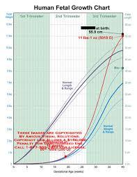 Human Fetal Growth Chart Amicus Illustration Of Amicus Medical Growth Chart Fetal
